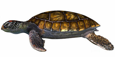 Green Sea Turtle Art Print by Corey Ford