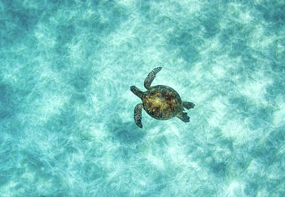 Underwater View Photograph - Green Sea Turtle In Under Water by M.M. Sweet