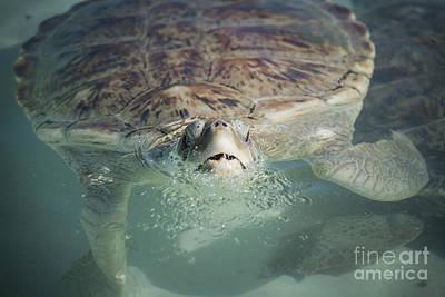 Photograph - Green Sea Turtle by Joann Long
