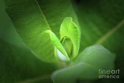 Photograph - Green Secrets by Karen Adams
