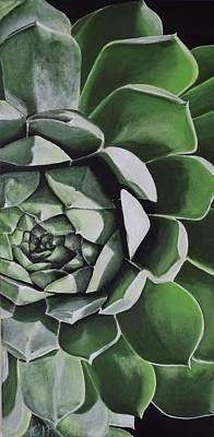 Sempervivum Painting - Green Sempervivum by Amelia Emery