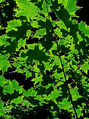 Photograph - Green Shadows by Juergen Weiss