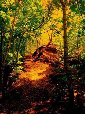 Photograph - Green Silence by Henryk Gorecki