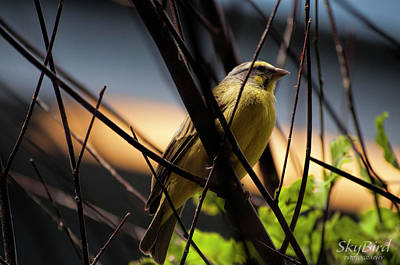 Door Locks And Handles - Green Singing Finch by Megan Miller