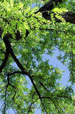 Photograph - Green Skies  by Andrea Mazzocchetti