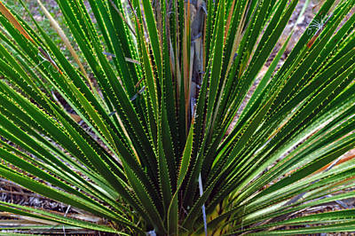 Photograph - Green Spiky Plant by Tikvah's Hope