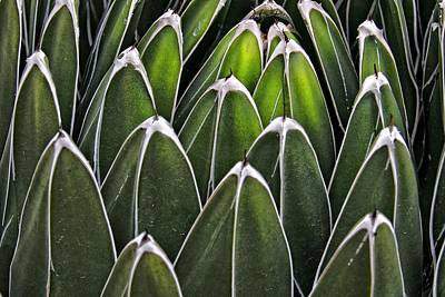 Photograph - Green Spines by Alice Gipson