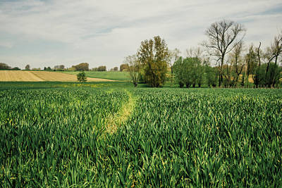 Cornfield Photograph - Green Spring Crop Field by Pati Photography