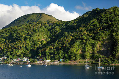 Photograph - Green St Lucia by Brian Jannsen