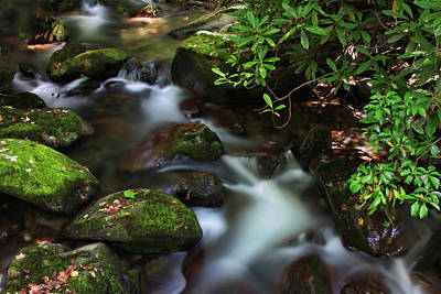 Photograph - Green Stream by Shari Jardina
