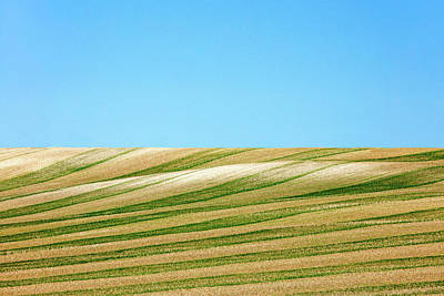 Country Art Photograph - Green Stripes by Todd Klassy
