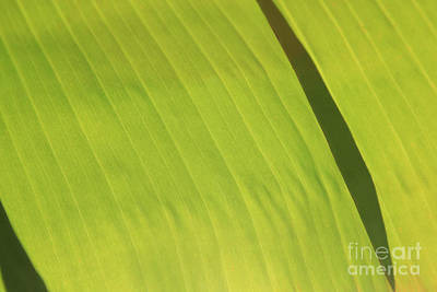 Wall Art - Photograph - Green Study One  by Dean Triolo