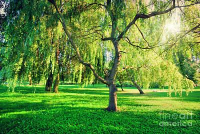 Tranquil Photograph - Green Summer Park Landscape by Michal Bednarek