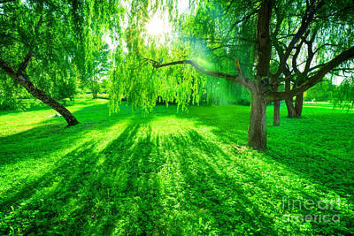 Photograph - Green Summer Park. Sun Shining Through Trees, Leaves by Michal Bednarek