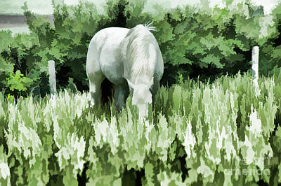 Photograph - Green Summer Pastures  by Wilma Birdwell