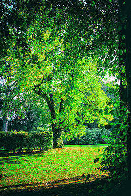 Green Summers Day Art Print by Niel Morley