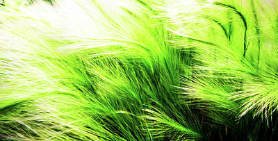 Photograph - Green Swaying Grass In Summer Breeze by John Williams