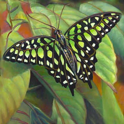Painting - Green Tailed Jay Butterfly by Nancy Tilles
