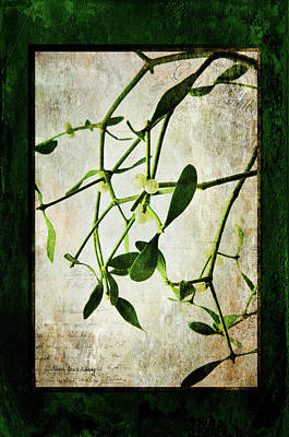 Photograph - Green Tales  by Randi Grace Nilsberg