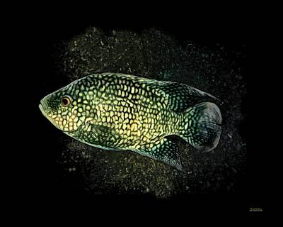 Green Texas Cichlid Art Print