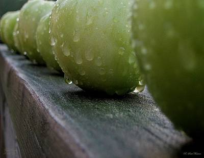 Green Tomato's Art Print by Robert Meanor