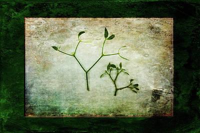 Photograph - Green Tradition by Randi Grace Nilsberg