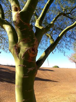 On Paper Photograph - Green Tree Az by Patricia Bigelow