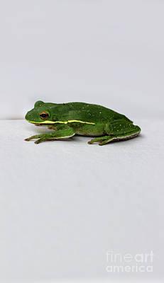 Photograph - Green Tree Frog 2016 by Karen Adams