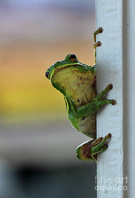 Photograph - Green Tree Frog  It's Not Easy Being Green by Karen Adams