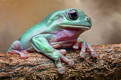 Photograph - Green Tree Frog by Nikolyn McDonald