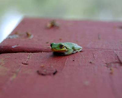 Photograph - Green Tree Frog by Robert Meanor