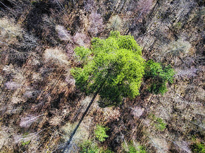 Photograph - Green Tree In Brown Forest Drone Photography by Matthias Hauser