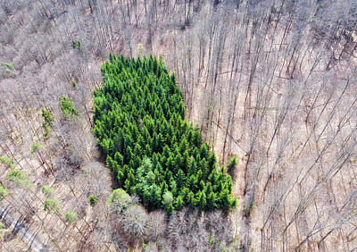 Photograph - Green Tree Island In March Forest From Above by Matthias Hauser