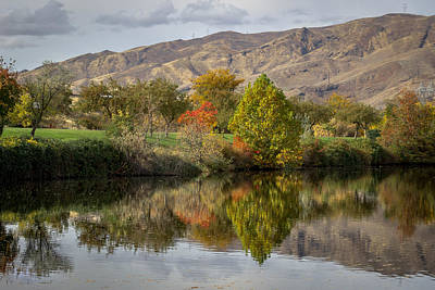 Green Tree Pond Reflection Art Print by Brad Stinson