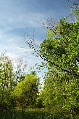 Old Masters - Green Trees by Amanda Kiplinger