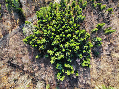 Photograph - Green Trees In Brown Forest Aerial View by Matthias Hauser