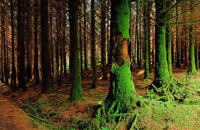 Green Trees, Mull Original by Jan W Faul