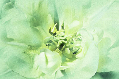 Photograph - Green Tulip by Lali Kacharava