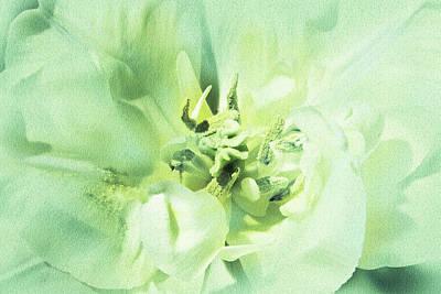 Photograph - Green Tulip by Lali Kacharava