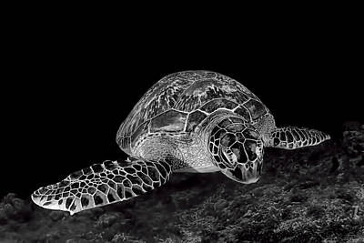 Underwater Photograph - Green Turtle by Henry Jager