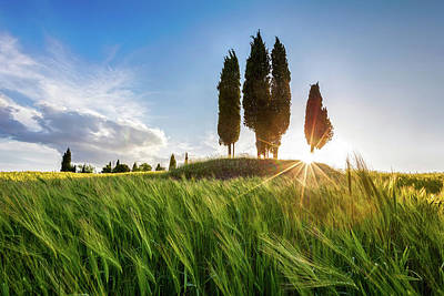 Green Tuscany Print by Evgeni Dinev