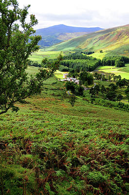 Photograph - Green Valley In Wicklow Hills. Ireland by Jenny Rainbow