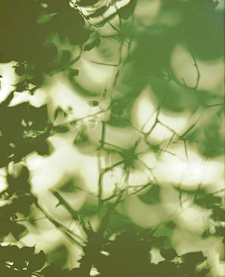 Photograph - Green Vegetation Moon Shadows by Carla Parris