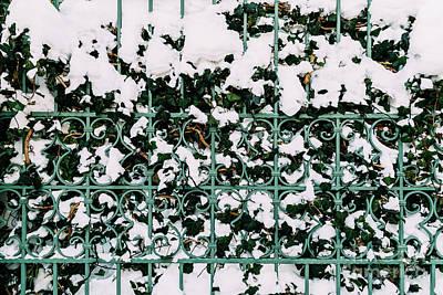 Green Vines Growing Through Steel Fence Covered In Winter Snow Art Print by Radu Bercan