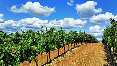 Wine Cellar Photograph - Green Vineyard White Clouds by Daniel Hagerman