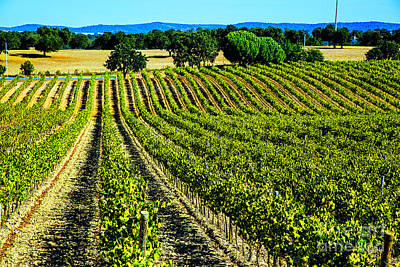 Photograph - Green Vineyards by Rick Bragan