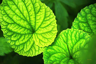 Photograph - Green Violet Leaf Pattern by Christina Rollo