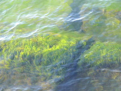 Print featuring the photograph Green Water by Beth Akerman