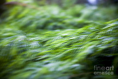 Photograph - Green Waterfall 1 by Serene Maisey