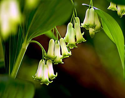 Green White Bells Art Print by JoAnn Lense
